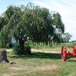 Roadside Treasures: Main Road (RT 25) - Riverhead, NY